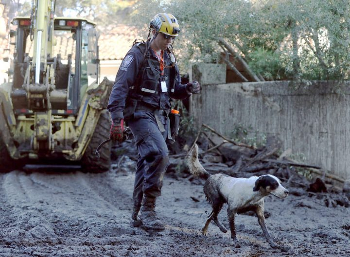 Organizations including the National Disaster Search Dog Foundation, pictured here, received CDRF Grants from the Santa Barbara Foundation to respond to the post-disaster needs of the community.
